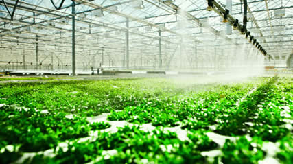 Image result for hydroponics