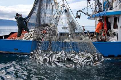 Image result for commercial fishing