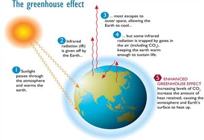 Image result for greenhouse effect