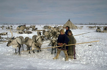 Image result for arctic indigenous people