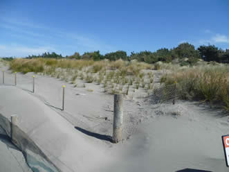 Image result for dune regeneration