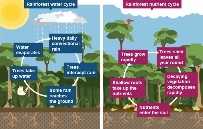 Image result for tropical rainforest water cycle