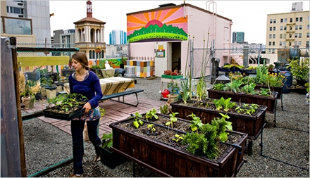 Image result for urban gardens