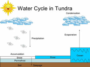 Image result for water and nutrient cycle tundra